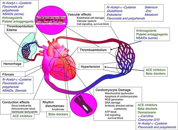 Creative Animodel Has Introduced A Series of Cardiotoxicity Services to Market 13