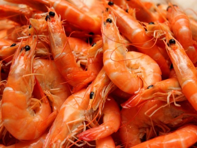 China Shrimp Market Expected to Reach 2 Million Tons by 2023 – IMARC Group 11