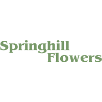 Springhill Flowers Wins the 2019 Consumer Choice Award for Top London Florist 14