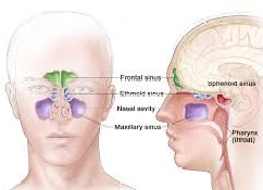 Paranasal Sinus Cancer Market 2019-2023: Production, Revenue, Price, Growth Rate, Type, Applicability in Medical Devices and Leading Key Players 3