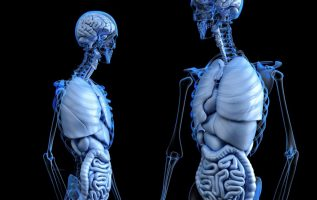 Global Artificial Organs Market Size to Expand at a CAGR of 9.5% during 2019-2024 | IMARC Group 3