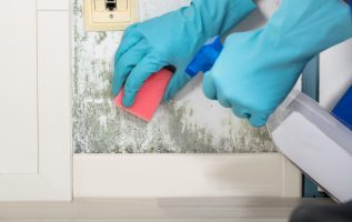 A PROFESSIONAL MOLD REMOVAL SERVICE IS A GOOD INVESTMENT AND THE BEST WAY TO PROTECT ALL KINDS OF PROPERTIES 3