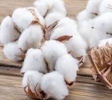 Organic Cotton Fiber: Latest Market Estimates Showing Surprising Stability in key Business Segments 4