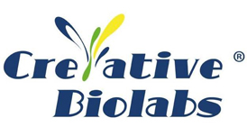 Enormous Library of Engineered Antibodies Available at Creative Biolabs 2
