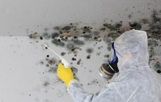 Mold Remediation Services Available in Jacksonville, Florida 2