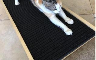 SCRATCHYRAMP INVENTS PET RAMP THAT'S ALSO A CAT SCRATCHER 3