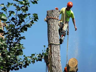 Tree Service Little Rock Company Expands Services 12