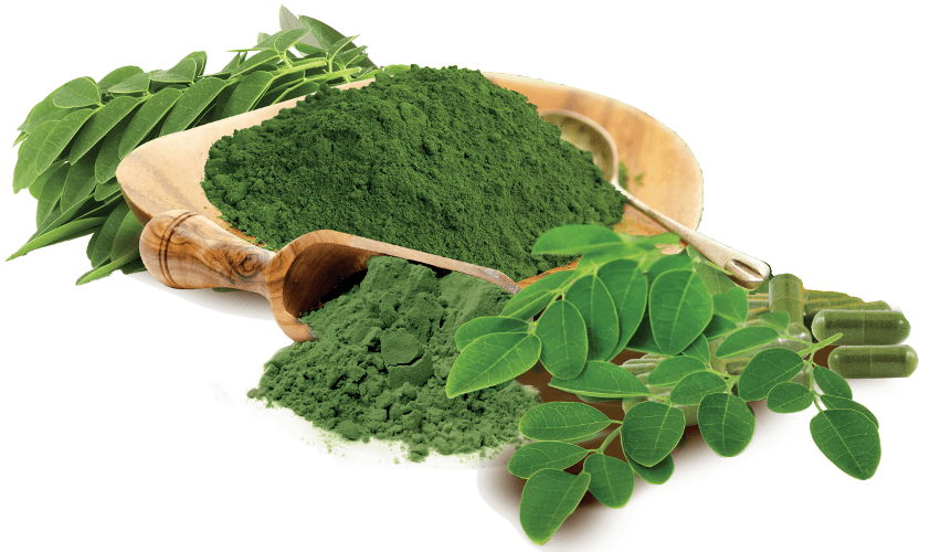 Moringa Products 2019 Market Company Profile,Capacity,Production,Price,Cost,Gross Market and Revenue Market Report 1