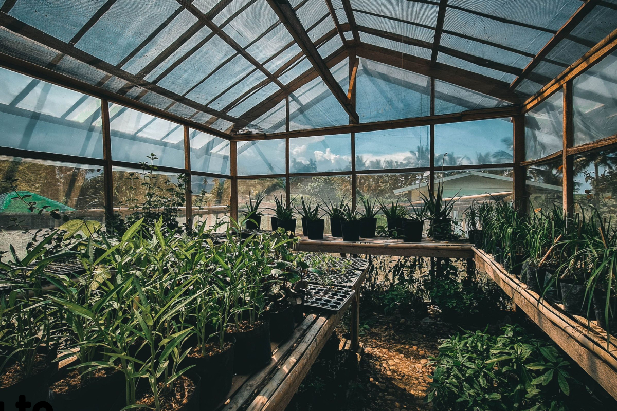 Realtimecampaign.com Explains How a Light Deprivation Greenhouse Will Increase a Yearly Harvest 2