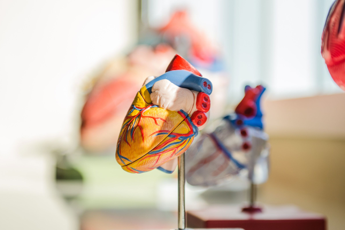 There Are Ways to Maintain a Healthy Cardiovascular System 1