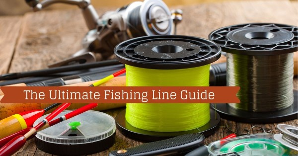 Discover All About Sustainable Fishing With Fishstainable Comprehensive Blogs 1