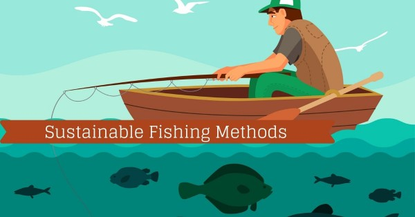 Discover All About Sustainable Fishing With Fishstainable Comprehensive Blogs 4