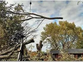 Santa Ana Tree Experts Has Built a New Website Featuring Comprehensive Tree Service in Santa Ana, CA 2