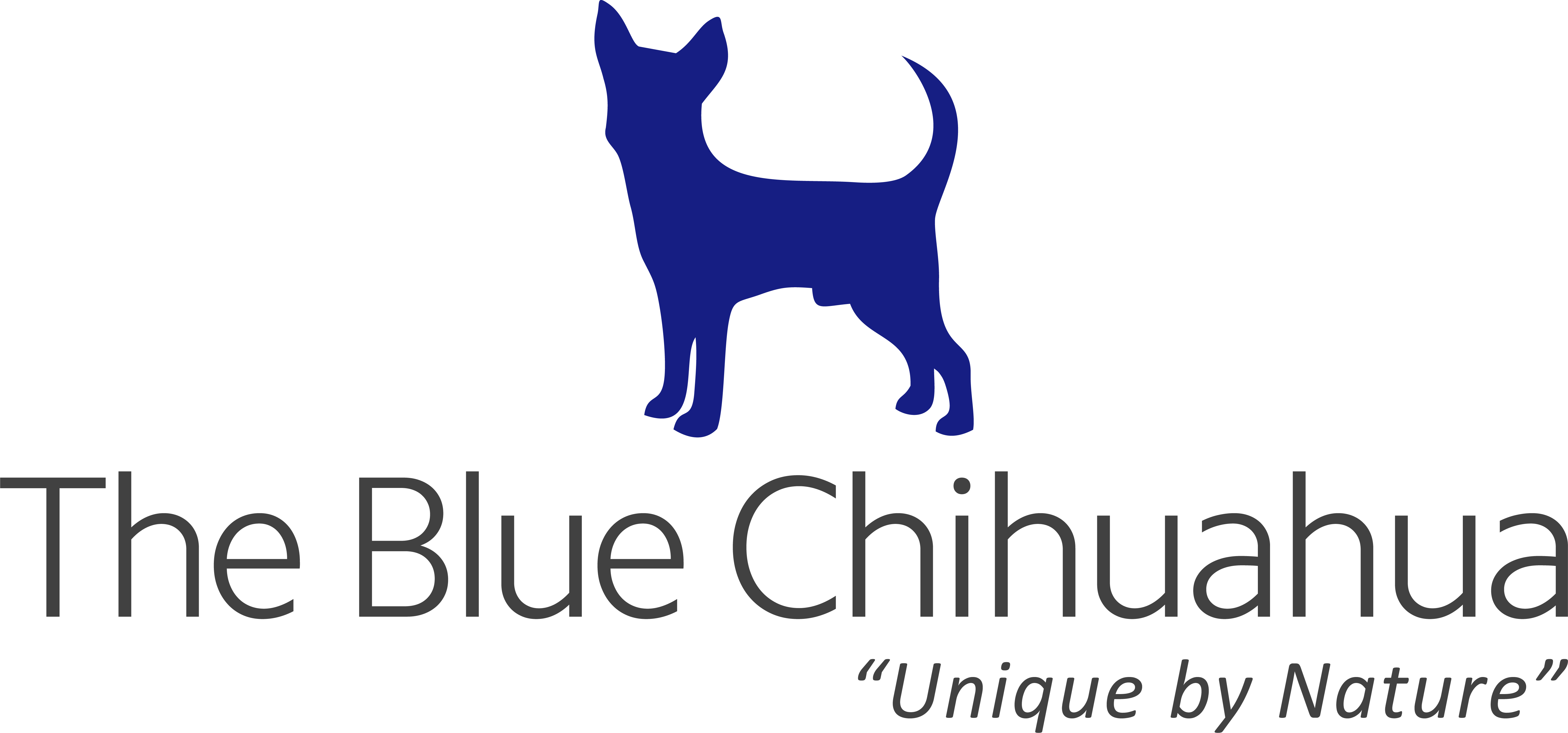 The Blue Chihuahua To Launch Website Soon, Prepares Massive Treasure Hunt For Users 1
