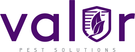 Valor Pest Solutions Has A New Website Featuring Top Pest Control Services For Residents Of St Paul, Minnesota 1
