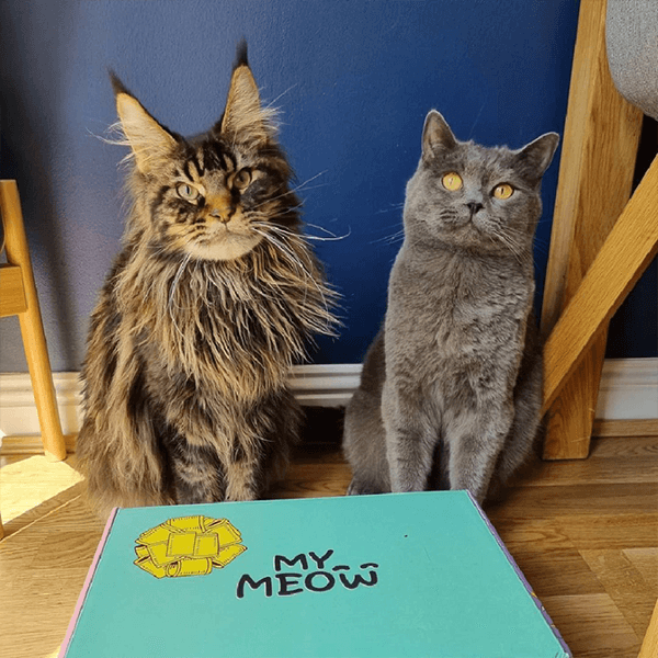 Founders Of British Dog Brand Wufwuf Announce Sister Mymeow Package 1