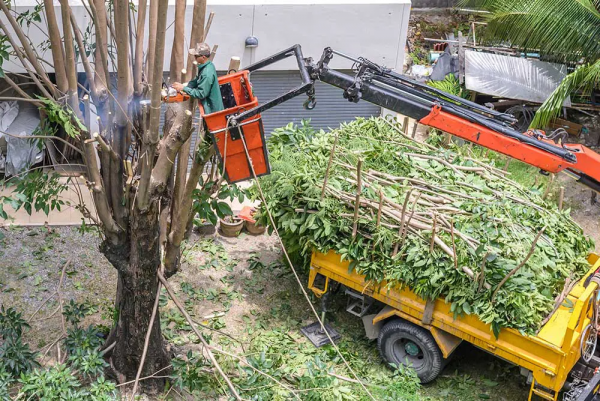 Orlando Tree Service Experts, Has Opened New Offices to Provide the Superior Tree Service Orlando to More People 2