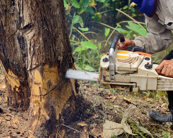 Apopka Tree Experts Launches a New Website to Enhance its Premier Tree Service in Apopka, FL 2