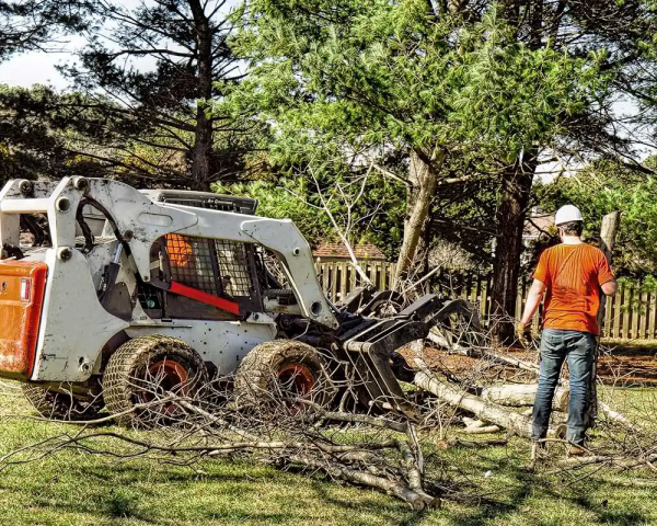 Jacksonville Tree Service Experts, the Premier Tree Service Jacksonville Provider Has Just Built a New Website Featuring all Tree Services, Tree Trimming, Tree Removal, and Tree Pruning 2
